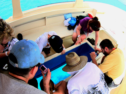 Cozumel amazing race Cruise Excursion Reservations