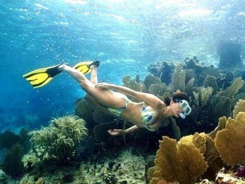 Cozumel Chankanaab Park Snorkel and Beach Excursion Combo