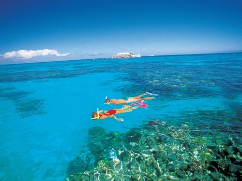 Cozumel colorful coral Excursion Booking