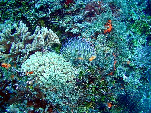 Cozumel colorful coral Trip Cost
