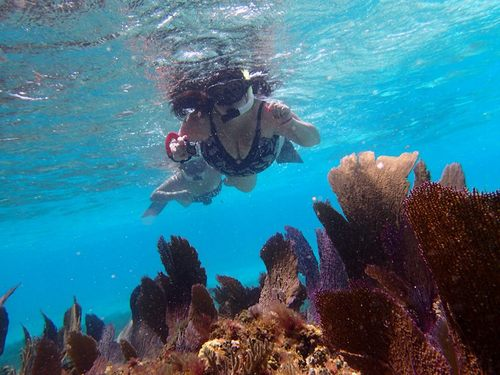 Cozumel colorful coral Trip Reservations
