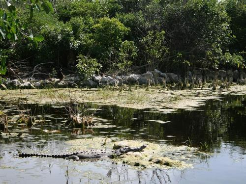 Cozumel crocodile lagoon Cruise Excursion Reservations