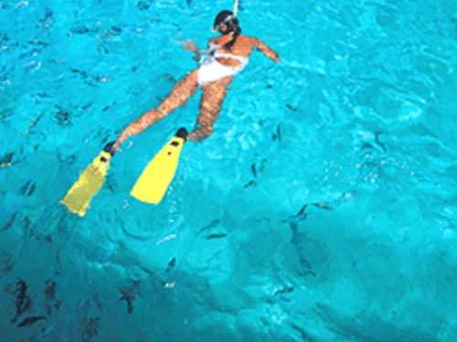Cozumel excellent snorkeling Cruise Excursion Prices