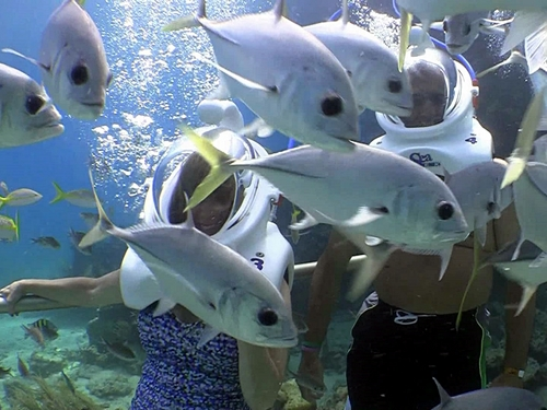 Cozumel Island walk on ocean floor Tour Reservations