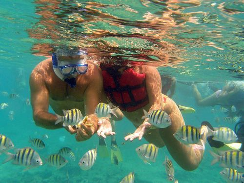 Cozumel marine life Cruise Excursion Reservations