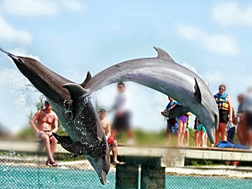 Cozumel Mexico chankanaab snorkel Excursion Booking
