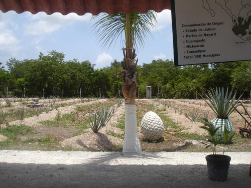 Cozumel  Mexico city tour Trip Reservations