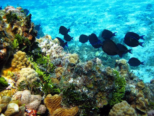 Cozumel Mexico coral formations Tour Reservations