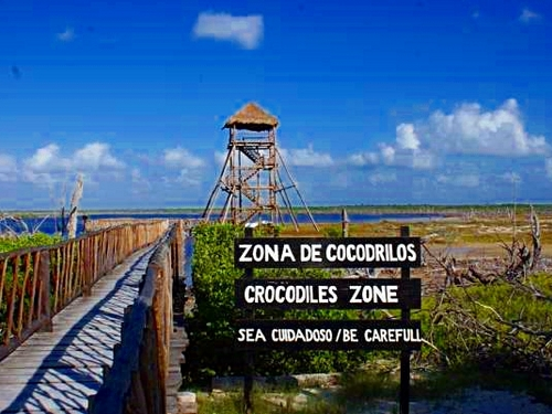 Cozumel Mexico crocodile lagoon Trip Reservations