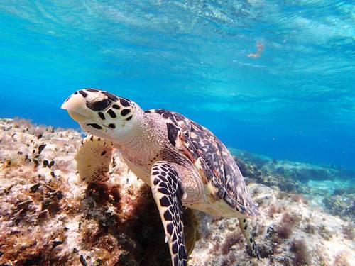 Cozumel Mexico crystal clear water Cruise Excursion Reservations