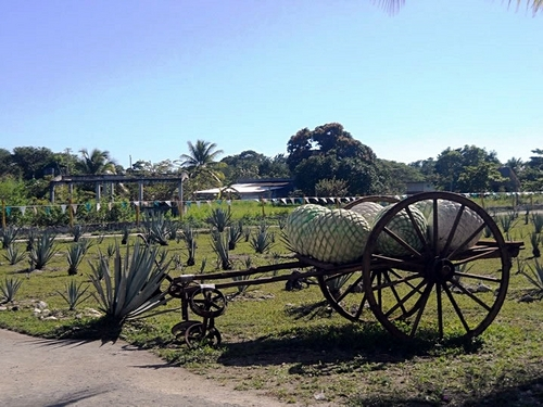 Cozumel Mexico learn how tequila is made Trip Reservations