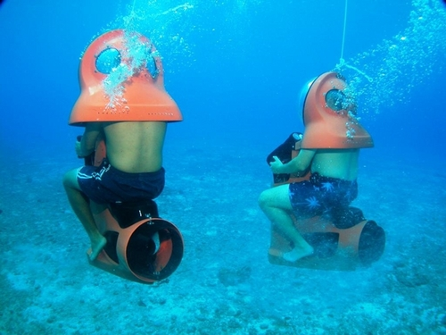 Cozumel Mexico marine life  Cruise Excursion Cost