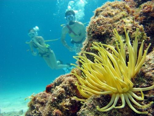Cozumel Mexico SNUBA and Snorkel Shore Excursion Booking Cost