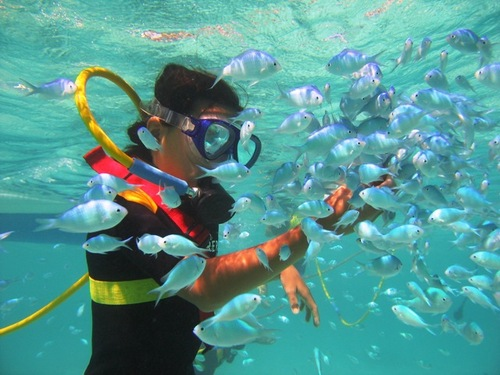 Cozumel Mexico SNUBA and Snorkeling Trip Reviews Cost