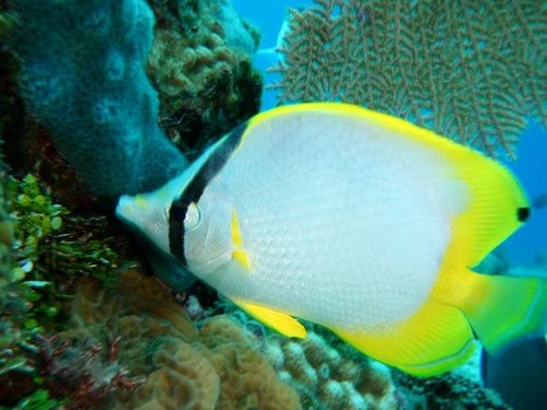 Cozumel Mexico tropical fish Cruise Excursion Reservations