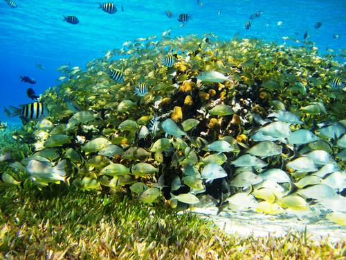 Cozumel Mexico tropical fish Cruise Excursion Tickets