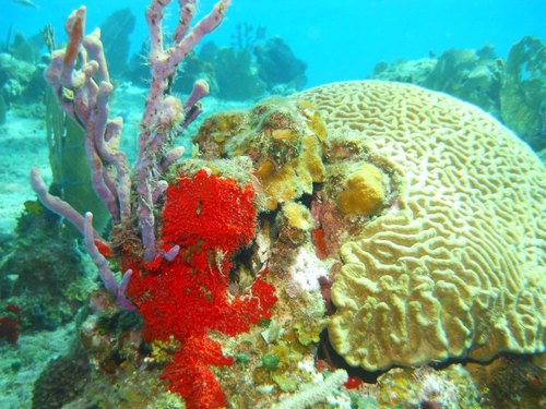 Cozumel Mexico tropical fish Tour Reservations