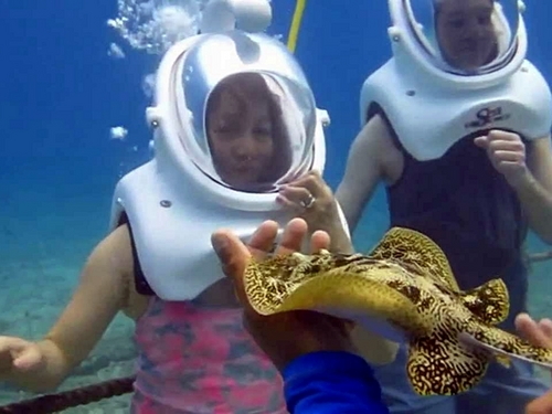 Cozumel Port walk on ocean floor Tour Reviews