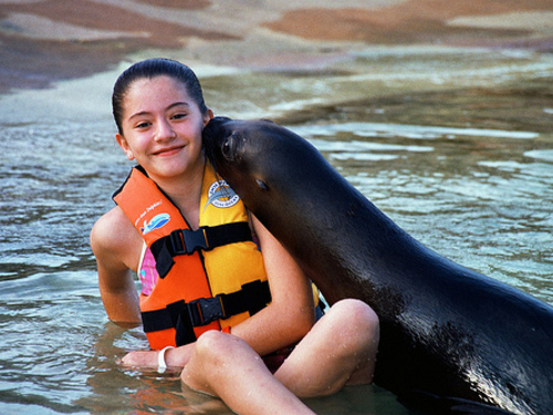Cozumel Sea Lion Encounter Excursion at Chankanaab Park