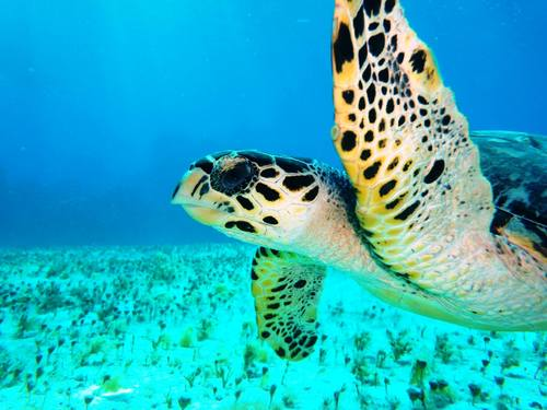 Cozumel snorkeling Cruise Excursion Reservations