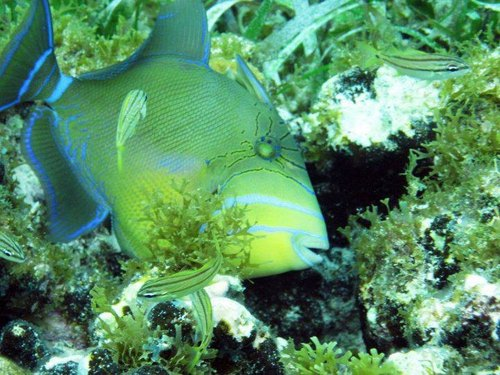 Cozumel snorkeling Tour Reservations