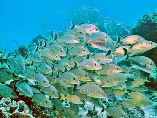 Cozumel SNUBA Diving and Snorkel Cruise Excursion Booking Prices