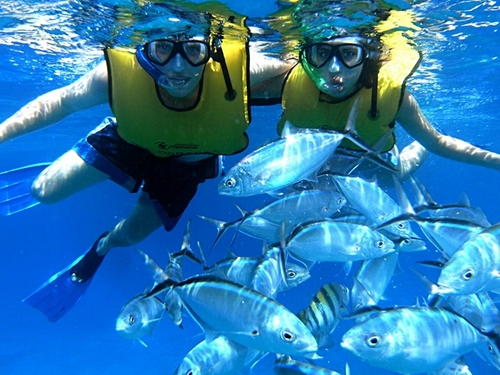 Cozumel tropical fish and colorful coral Cruise Excursion Booking