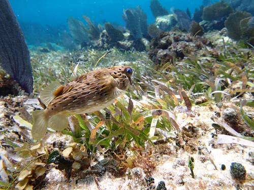 Cozumel tropical fish and colorful coral Tour Booking