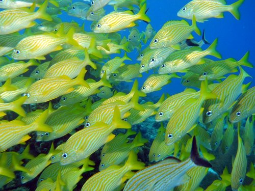 Cozumel tropical fish Excursion Tickets