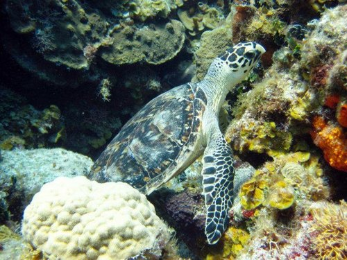 Cozumel tropical fish Trip Reservations