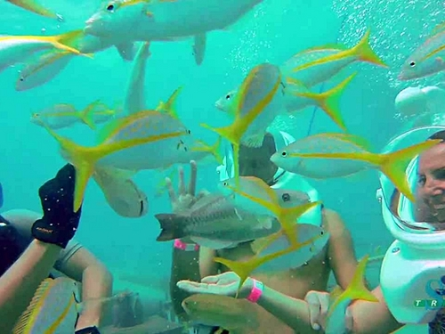 Cozumel walk on ocean floor Tour Booking