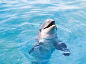 Cozumel Dolphins  Excursions