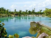 Cozumel Eco Tour  Excursions